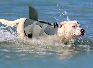 жилет спасательный для домашних животных собаки и кошки